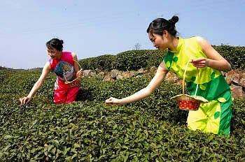 梅家塢茶園